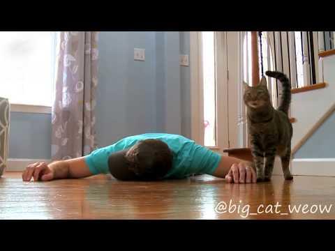 Реакция кошки на лежащего хозяина