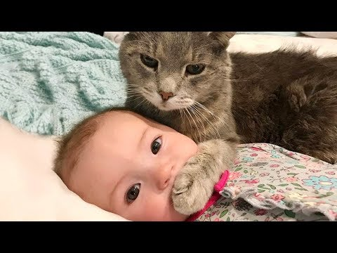 Ребенок и смешной кот